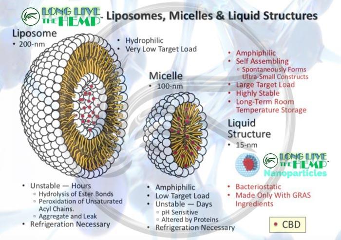liposome-vs-micelle-vs-liquid-structures.jpg