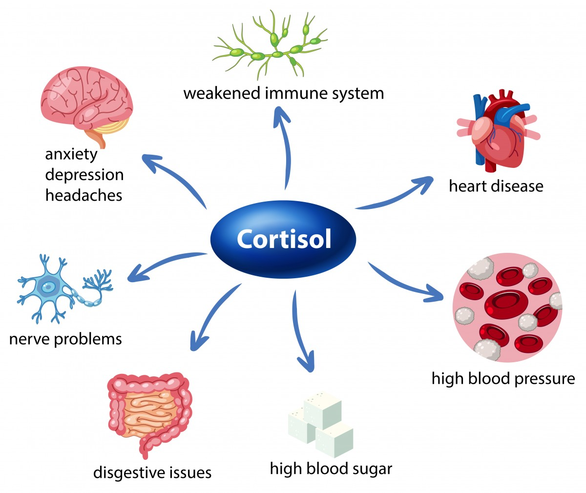 Cortisol's effect on heatlh.jpg