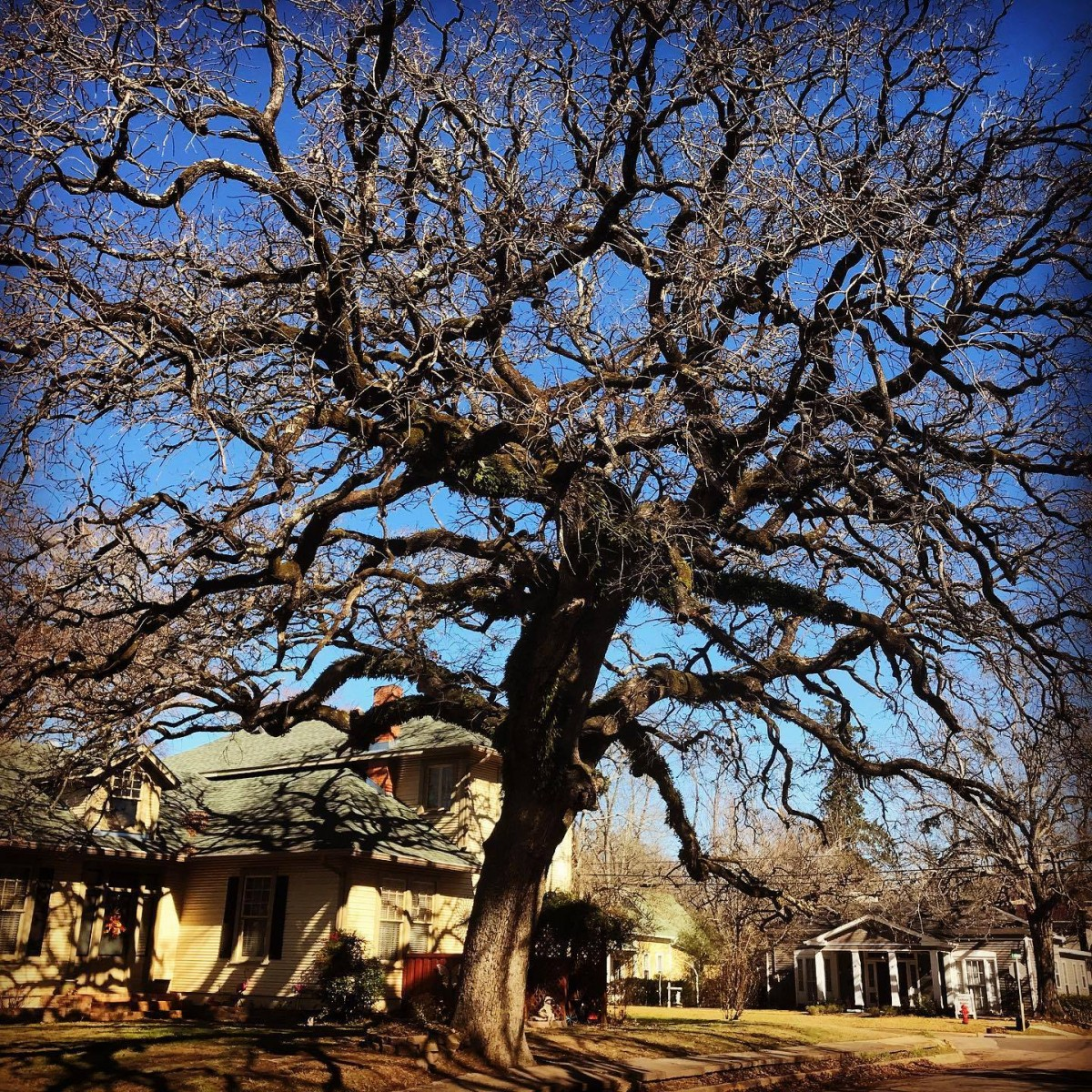 What Our Clients Craved to Know About Tree Removal