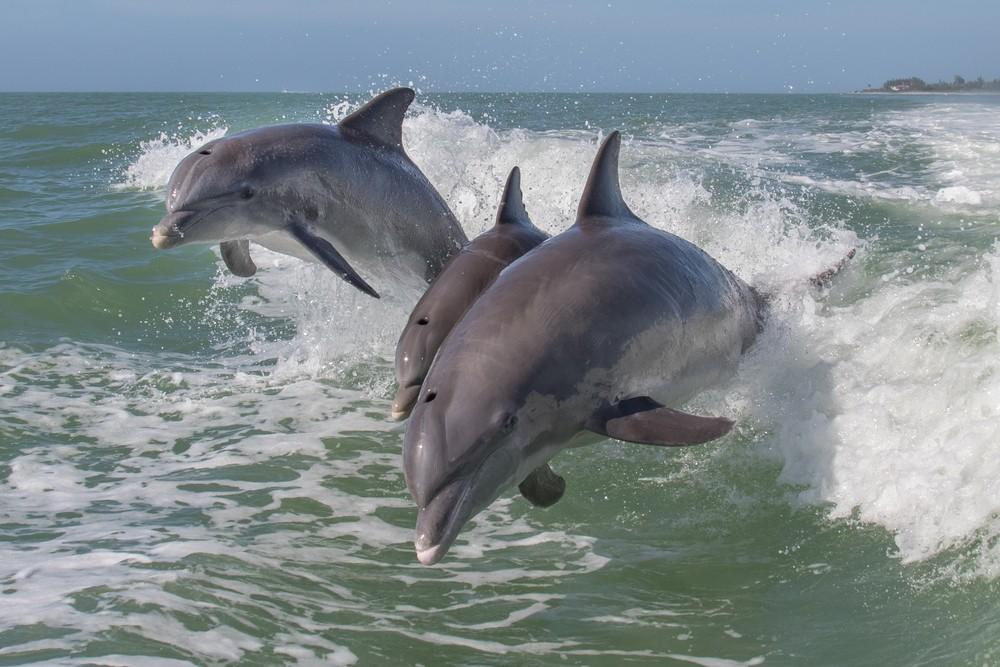 dolphin tours.jpg