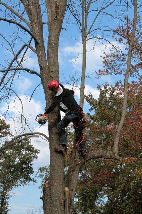 Emerald Ash Borer Tree Service.jpg