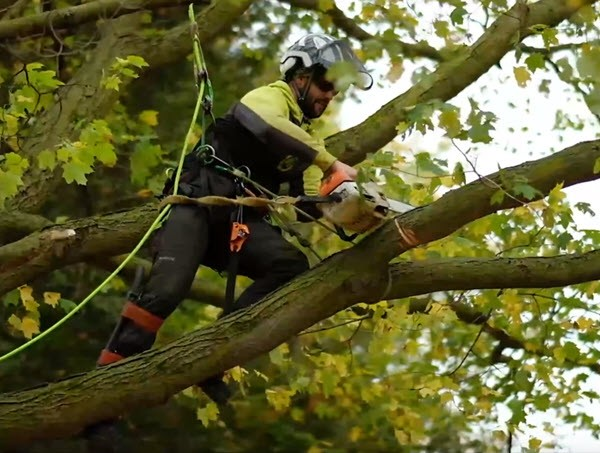 Tree Trimming & Removal Service in Stafford County VA.jpg