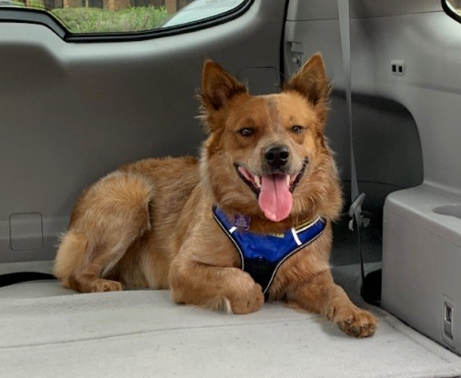 Dog Sitting Car.jpg